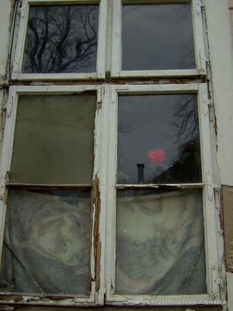 o floare in fereastra