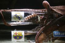 Caracatita Iker si-a ales favorita din semifinalele Ligii Campionilor