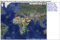 Harta migratiei celor sase pasari