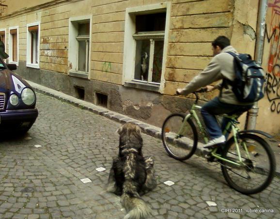 iubire canina