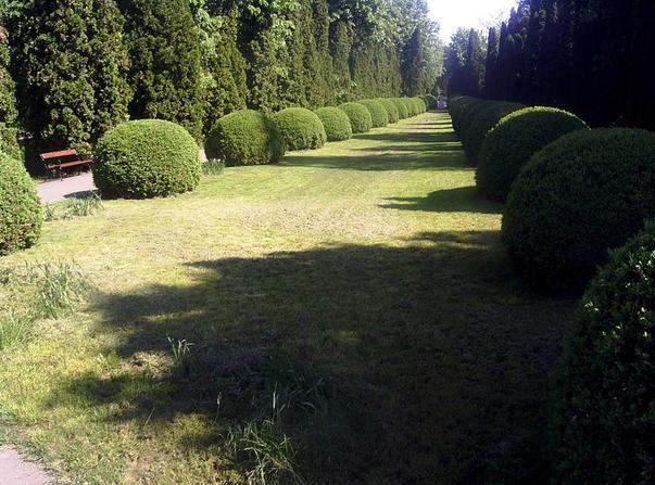 gradina botanica (2)
