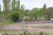 Defrisare Parcul Tineretului