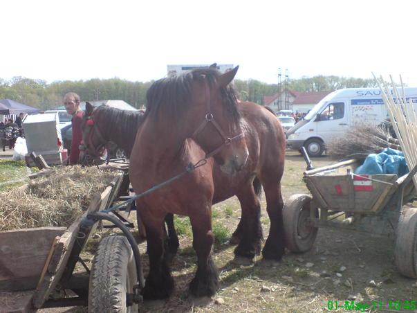 cat doi cai frumosi:)