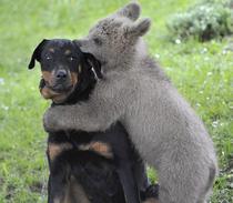 Ursuletul Lucky, imbratisand cainele familiei