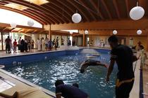 Rebelii s-au scaldat in piscina din resedinta de lux a fiicei lui Gaddafi, Aisha