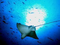 Viata marina in Insulele Galapagos