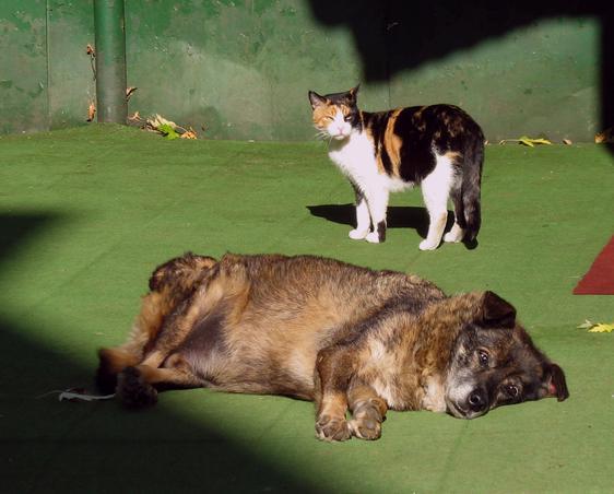 """""""Se au precum cainele si pisica"""" (3)"""
