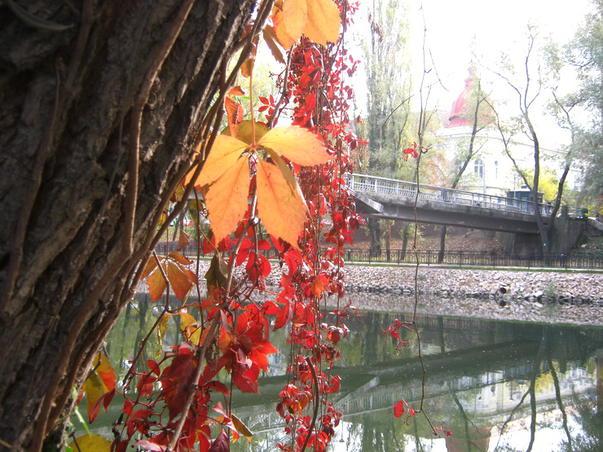 Culorile toamnei - 25 octombrie 2011