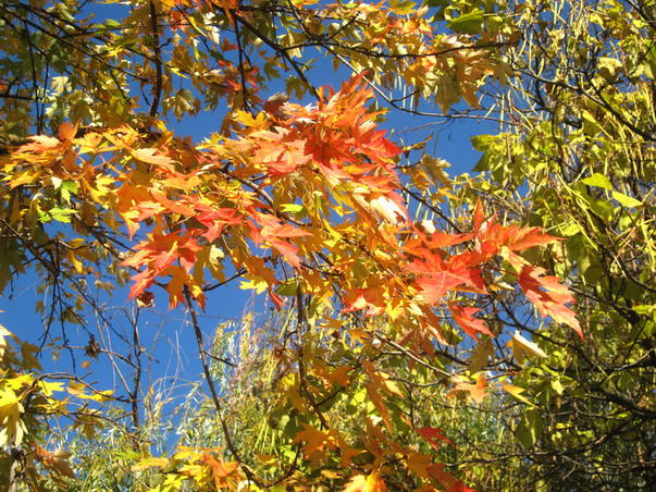 Culorile toamnei - 26 octombrie 2011 (1)