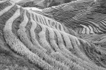 Spinarea dragonului de langa Longsheng