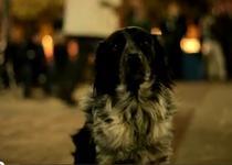 Shelby, liderul Occupy Denver