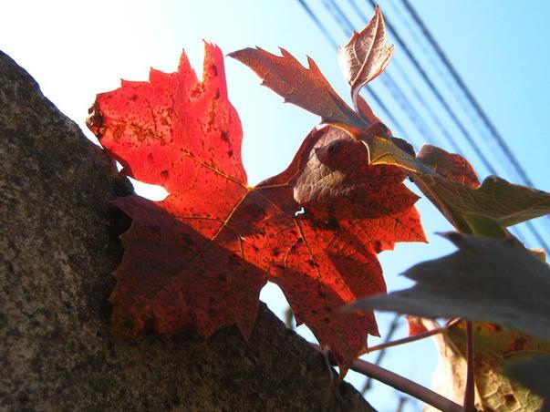 Rosu de noiembrie