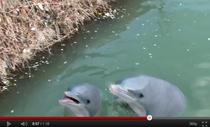 Delfinii maidanezi
