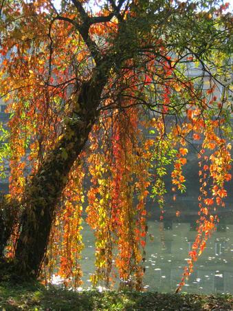 Culorile toamnei - 2 noiembrie 2011 (1)