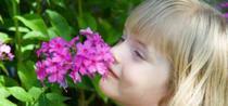 Mirosul, direct legat de memorie