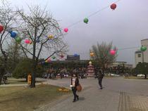 Campusul in timpul sarbatoririi lui Buddha 1