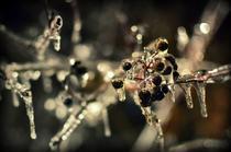Fotogalerie: Freezing Rain