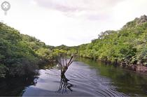 Google Street View in Amazonia