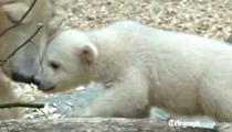Anori, debutul la gradina zoologica