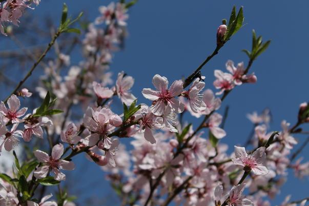 Au inflorit magnolii! (3)