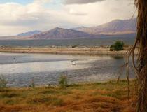 Marea Salton