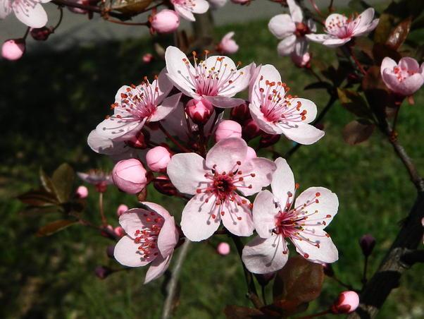 Flori (2)