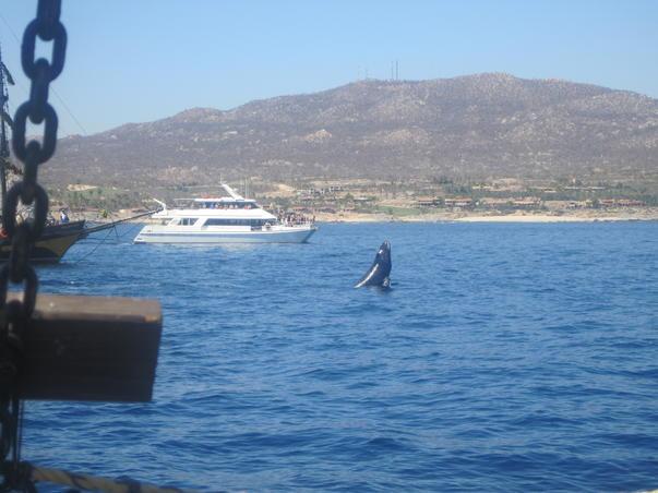Salutul balenei..