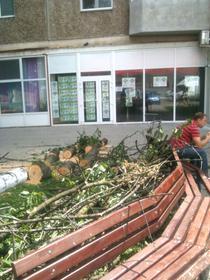 Copac taiat in Arad
