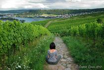 Valea Rinului