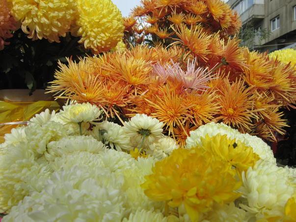 Flori de noiembrie