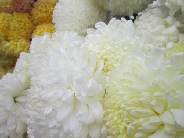 Flori de weekend