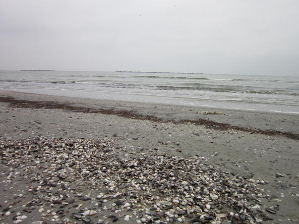 Marea la sfarsit de noiembrie