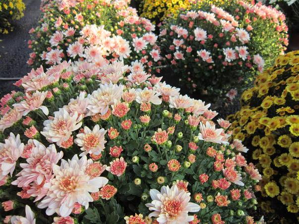 Noiembrie floral