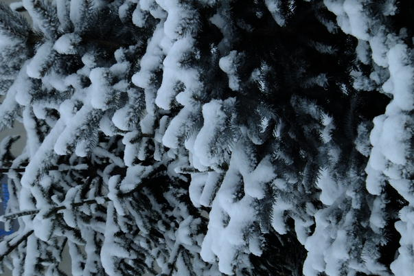 Prima zapada a anului