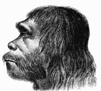 Reconstructie a capului unui neanderthal