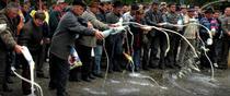 Protest al producatorilor de lapte