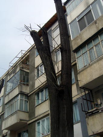 Dezastru ecologic in Onesti (2)
