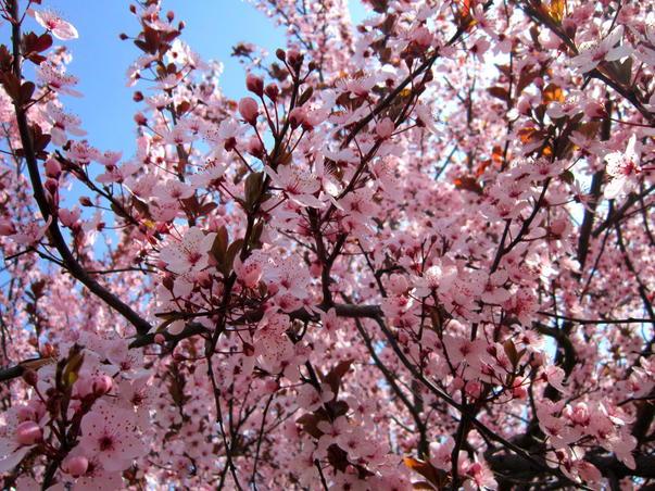 Bucurie de aprilie