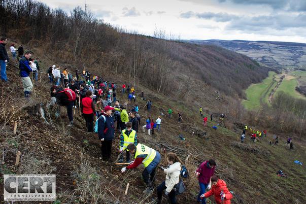 Voluntari la impadurire (2)