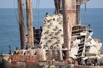 "FOTOGALERIE Cormorani pe nava ""Evanghelia"""