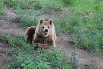 Click aici pentru fotogalerie de la sanctuarul de ursi