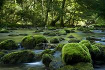 FOTOGALERIE Arii naturale protejate din Romania