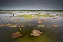Rezervatia biosferei Delta Dunarii