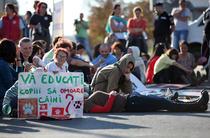 Protest fata de eutanasierea cainilor comunitari