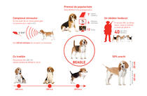 Royal Canin caini Beagle