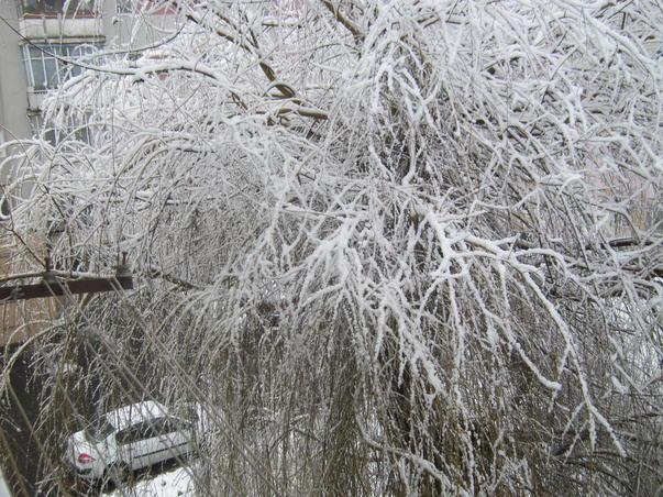 Iarna  de la fereastra mea
