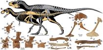 Reconstructia scheletului Lythronax argentes (A) si Teratophoneus curriei (B)