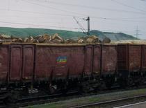 Lemnul romanesc, la export