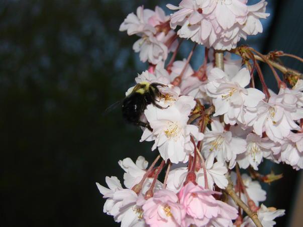 Bee Zee