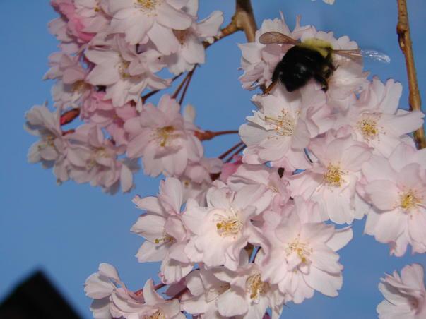 Bee Zee (2)